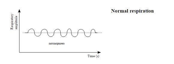 normal respiration