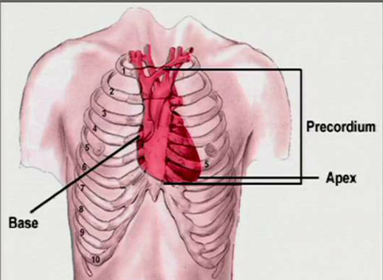 Precordial Chest Pain precordium