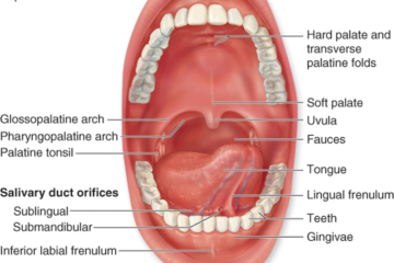 Physiology of the Oral Mucosa