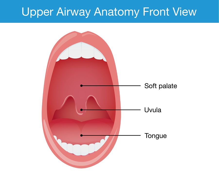 upper airway anatomy - uvulitis